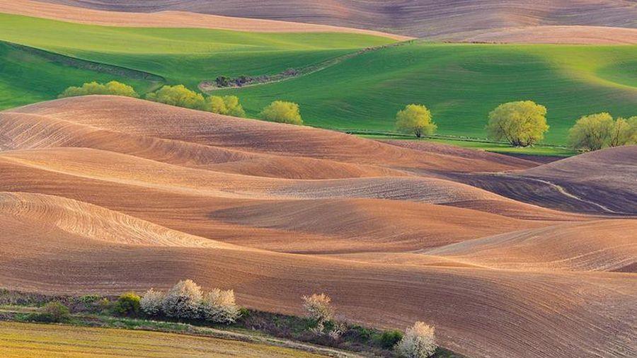 Ngắm vùng đất có những thảm cỏ đa sắc màu đẹp hơn tranh sơn mài