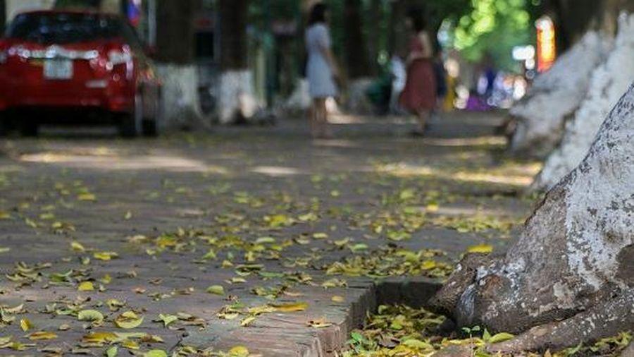 Hà Nội sang thu đẹp nao lòng, lá vàng chao nghiêng phủ khắp phố phường