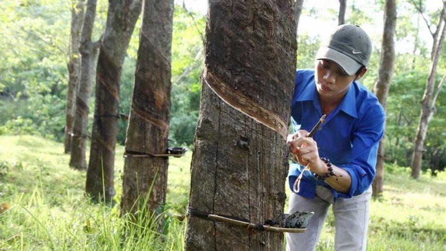 Tập đoàn Công nghiệp Cao su Việt Nam: Hàng loạt sai phạm trong quản lý nhà đất