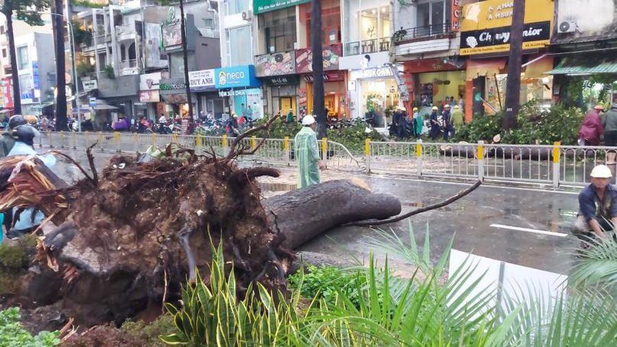 Cây đổ chết người, TPHCM yêu cầu tăng cường quản lý cây xanh