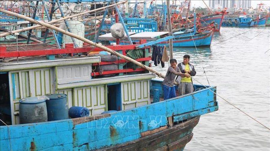 Hoàn thiện hạ tầng cảng cá và khu neo đậu tàu thuyền trước mùa mưa bão