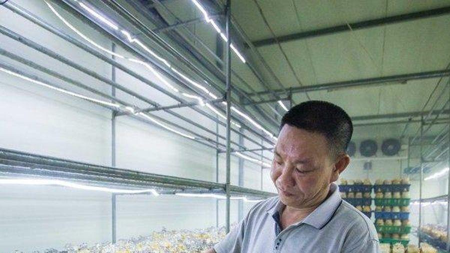 'Bí mật quy trình' bên trong xưởng sản xuất nấm lớn nhất Thủ đô