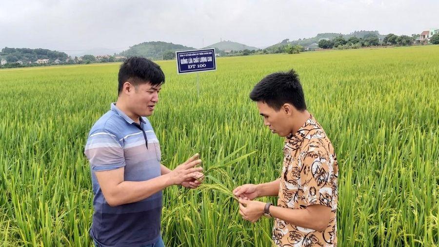 Điểm sáng Công ty CP Giống cây trồng Quảng Ninh