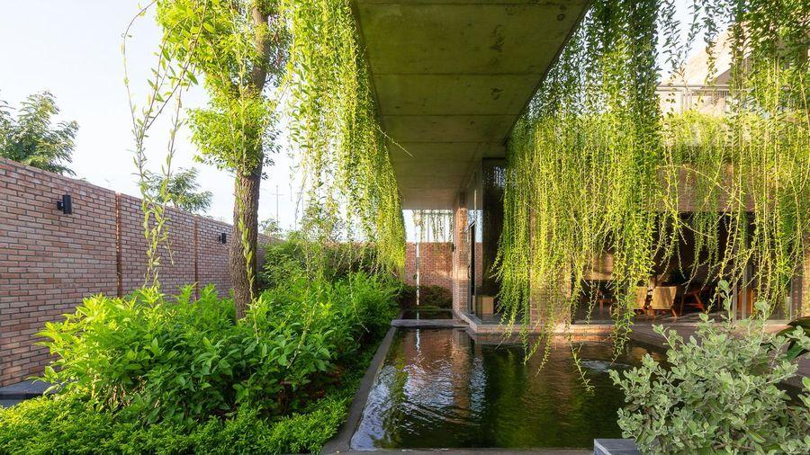 Mướt mắt nhà gạch mộc phủ kín cây xanh ở Quảng Ninh