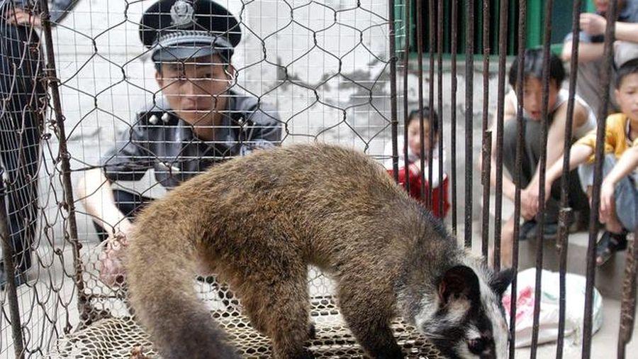 Pháp cấm nuôi động vật hoang dã