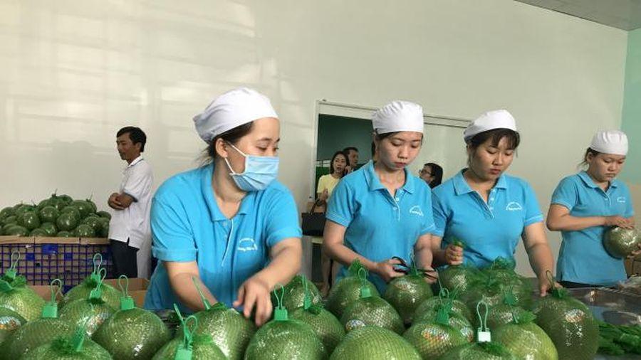 Xuất khẩu rau quả hồi phục sau nhiều tháng tăng trưởng âm