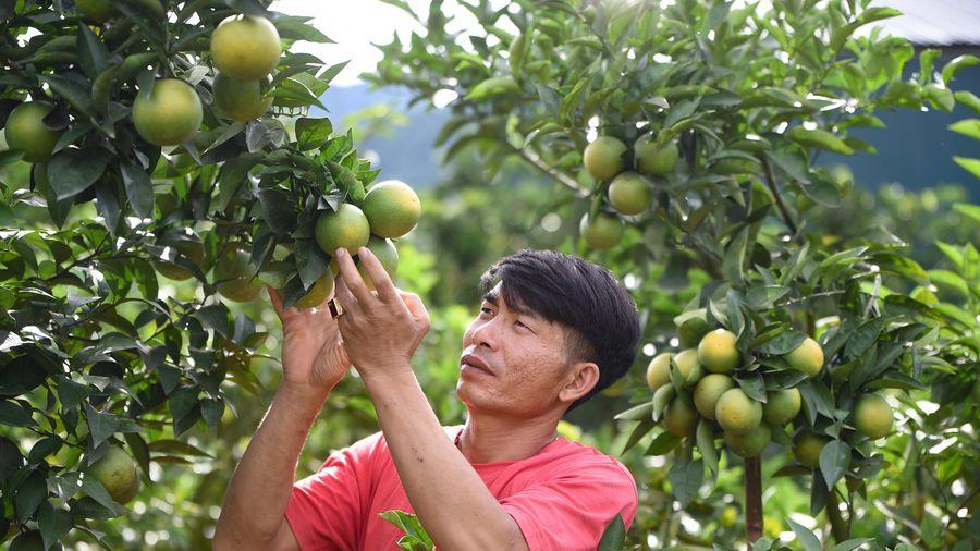 Các tỉnh Trung du và miền núi Bắc Bộ cần khai thác 4 lợi thế vùng