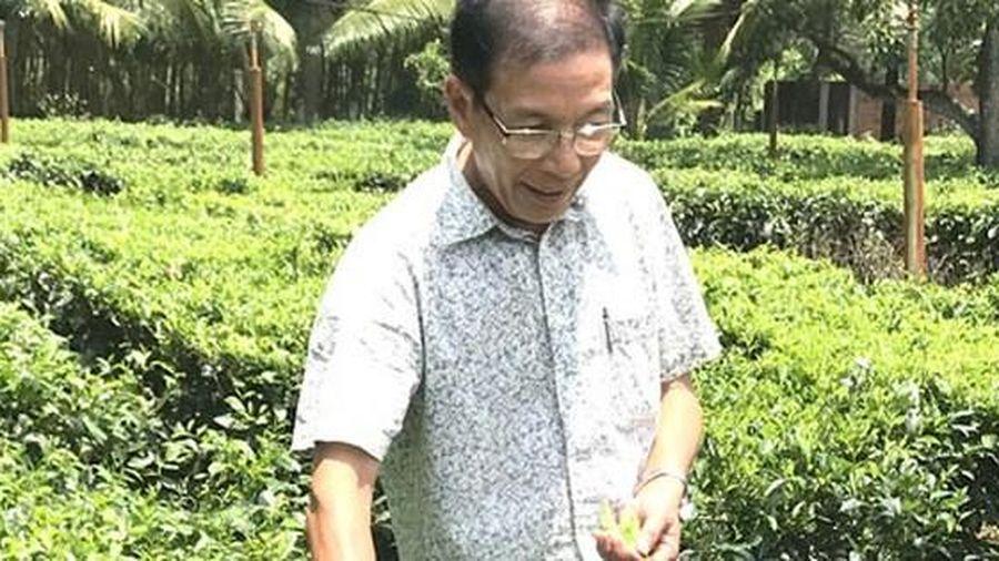 Khôi phục danh trà Gò Loi