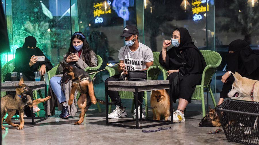 Quán càphê đầu tiên dành cho chó tại Saudi Arabia