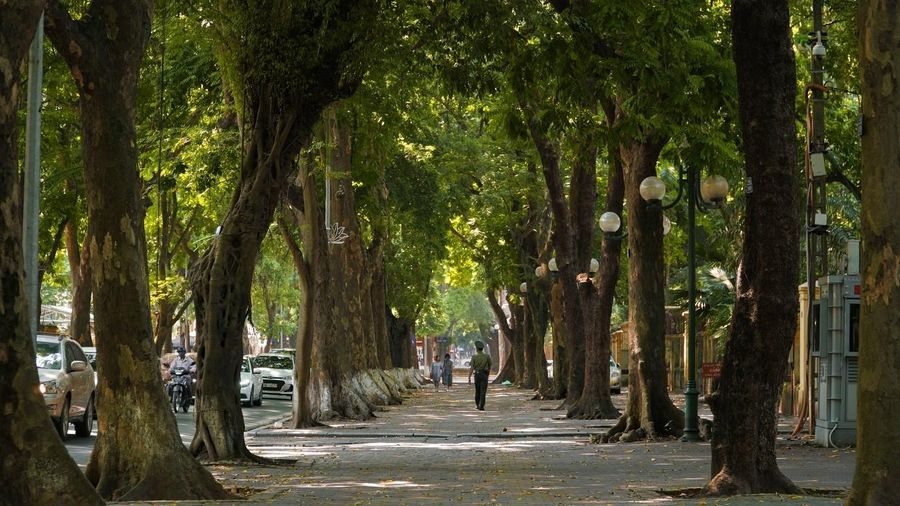 Ngắm lá vàng rơi trên con phố lãng mạn bậc nhất Hà thành