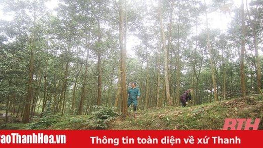 Bảo vệ và phát triển rừng bền vững tại Ban Quản lý rừng phòng hộ Như Thanh