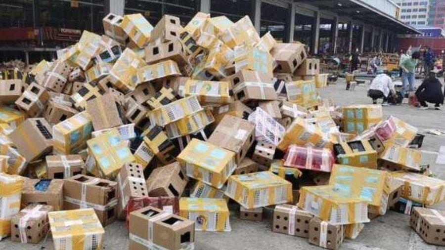 5.000 thú cưng chết trong hộp giấy đục lỗ tại kho hàng ở Trung Quốc
