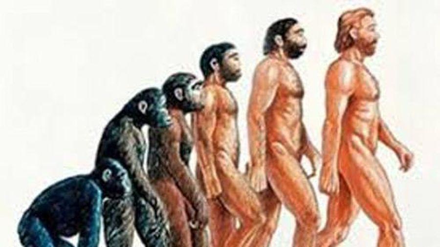 Sự thật về hóa thạch loài khỉ cổ có thể là tổ tiên chung cuối cùng của con người