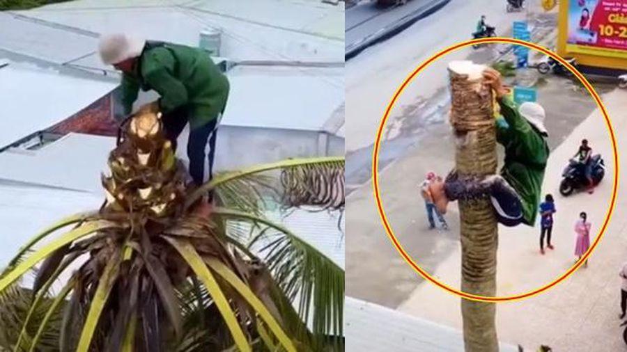 Thót tim xem người đàn ông miền Tây đu đưa cưa đổ cây dừa cao hàng chục mét