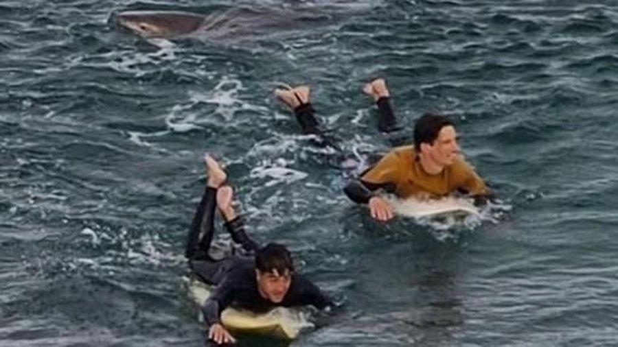 Báo động tình trạng cá mập tấn công ở Úc