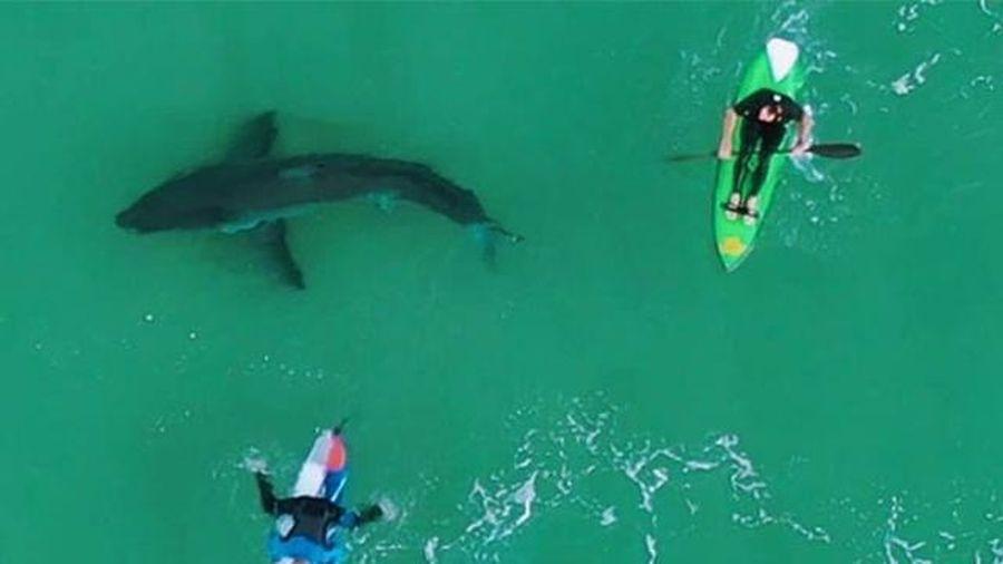Drone cảnh báo cá mập tấn công người lướt ván