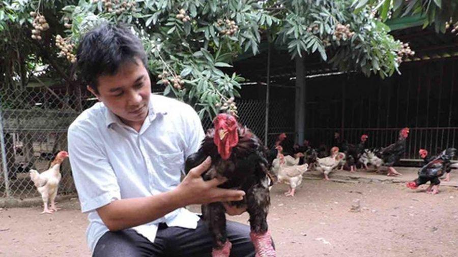 Đổi đời nhờ gà Đông Tảo