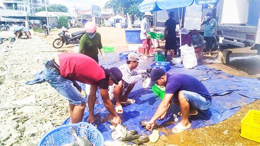 Lo mưa lụt, người dân bán tháo cá lồng bè