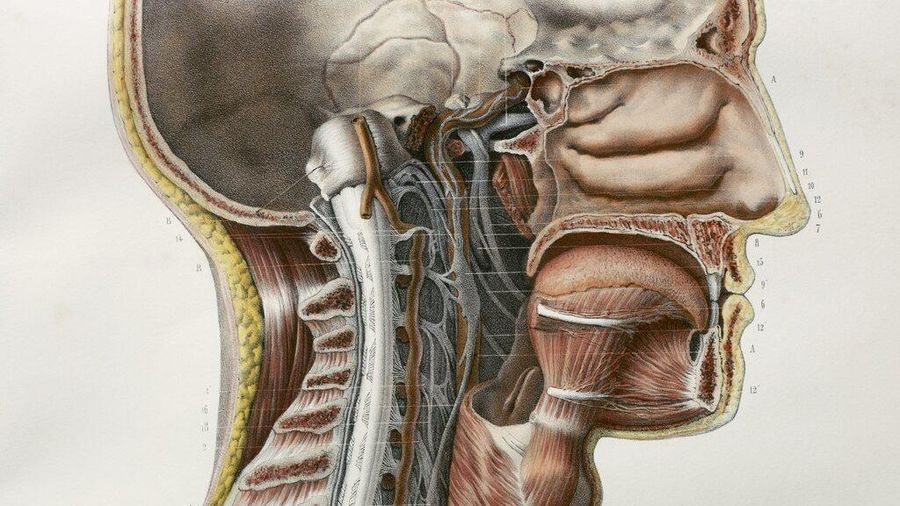 Phát hiện cấu trúc mới trong cơ thể con người