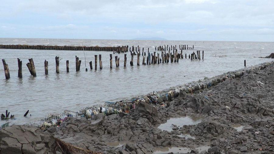 Cà Mau quyết định tình huống khẩn cấp đối với 5 đoạn sạt lở đê biển Tây