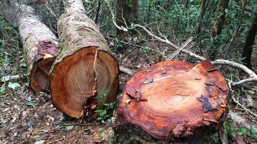 Sa thải Giám đốc để mất rừng ở Kon Tum