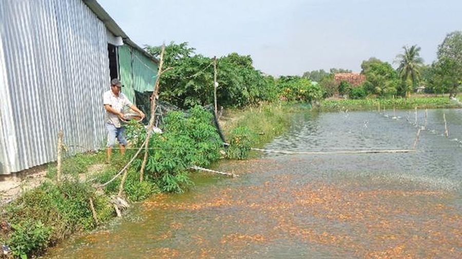 Cơ sở thực tiễn và động lực thúc đẩy phát triển nông nghiệp tuần hoàn tại Việt Nam: Kinh tế VAC