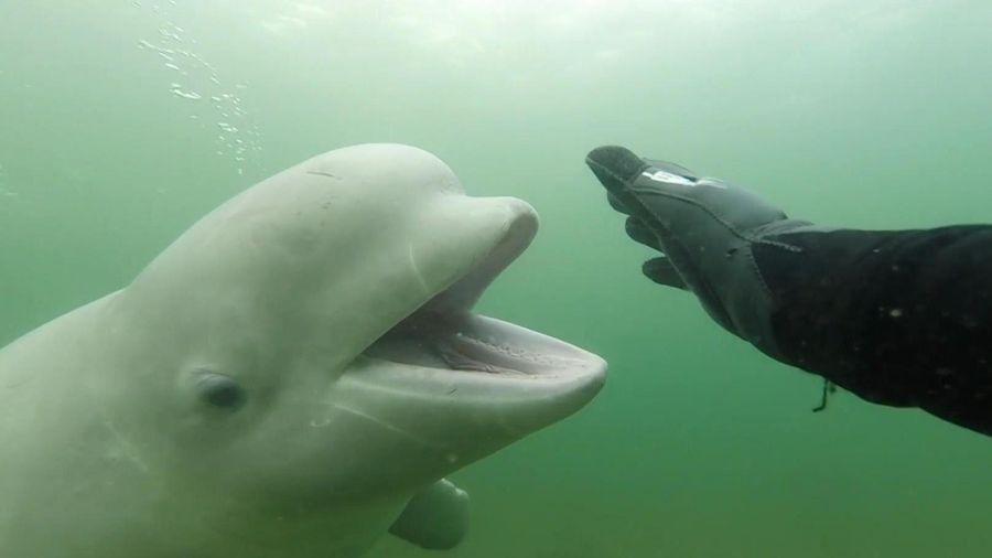 Thợ lặn chạm trán cá voi trắng