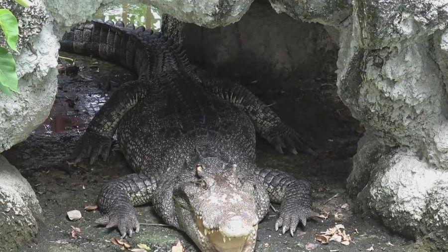Ngôi đền có 3 con cá sấu ở Thái Lan