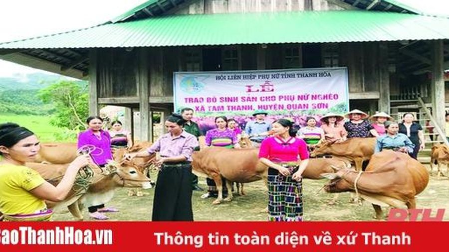 Phụ nữ huyện Quan Sơn với 'Mô hình chăn nuôi bò sinh sản'