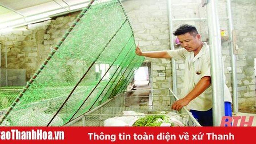 Các mô hình phát triển kinh tế nông nghiệp bền vững ở huyện Như Thanh
