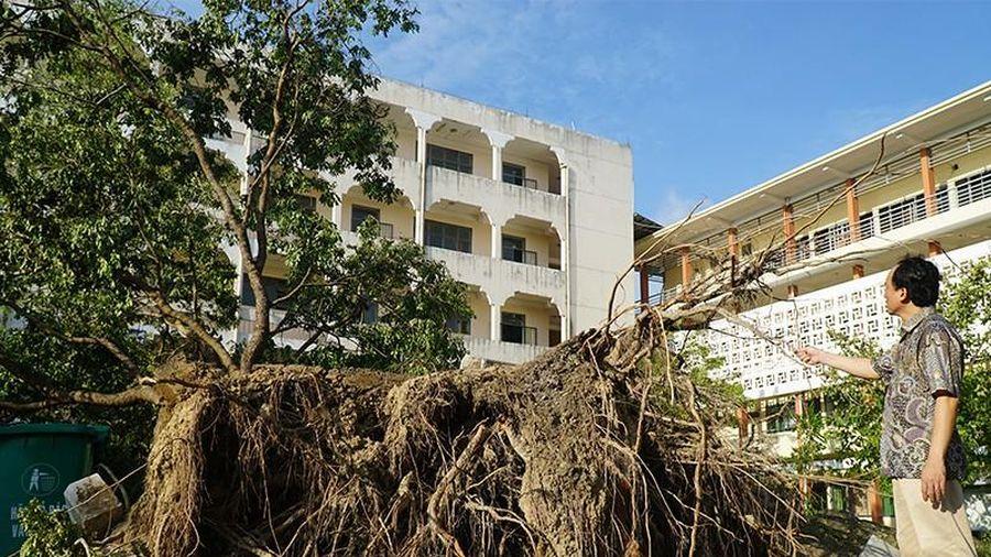 Cận cảnh trường học tan hoang sau bão ở Quảng Ngãi
