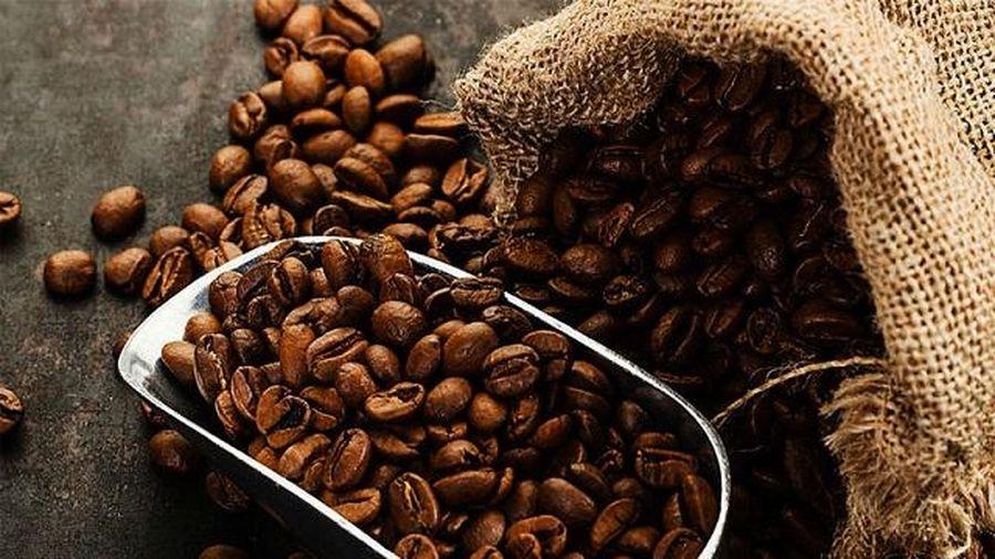Giá cà phê hôm nay 30/10: Thị trường chịu tác động kép, giá cà phê thế giới khó hồi phục