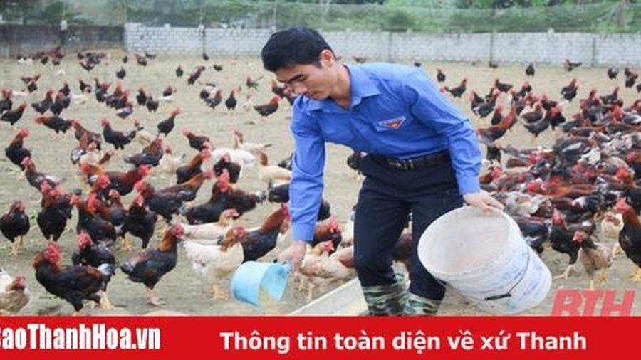 Bí thư chi đoàn làm giàu từ mô hình chăn nuôi gà sạch theo tiêu chuẩn VietGAP