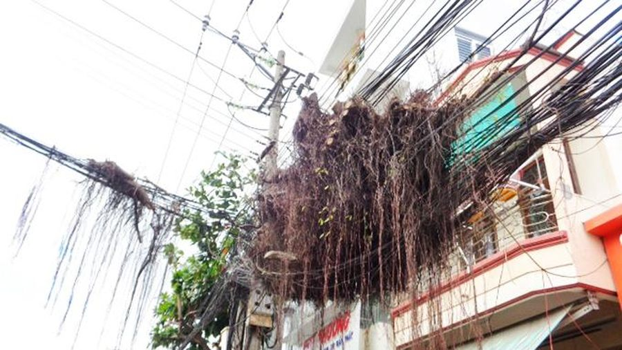 Chùm cây khô nằm trên dây điện, cáp viễn thông