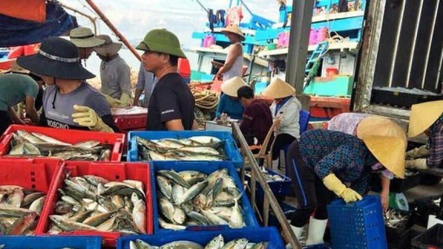 Ngư dân miền Trung trúng đậm mùa cá liệt, ruốc biển