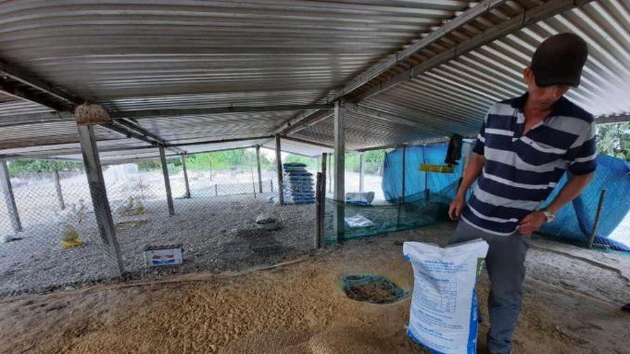 Dồn tổng lực tái thiết sản xuất nông nghiệp miền Trung