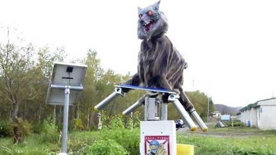 'Quái vật' sói bảo vệ dân làng ở Nhật Bản khỏi gấu hung dữ