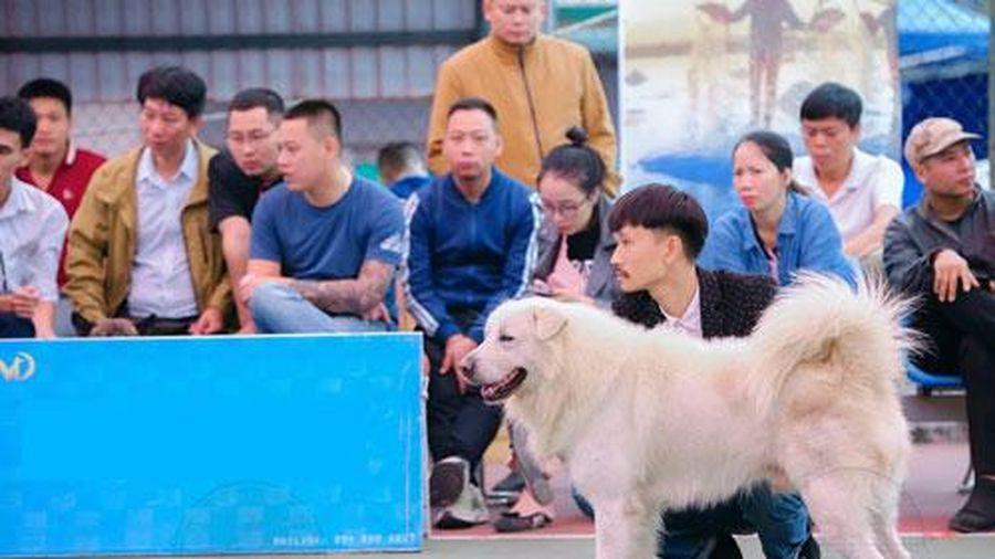 Chiêm ngưỡng 'Hoa hậu chó' Việt Nam 2020