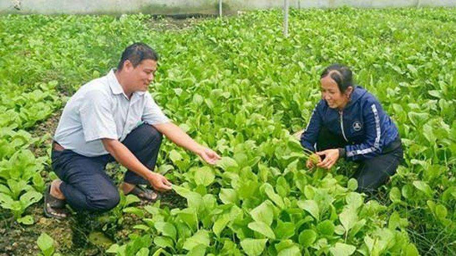 Hỗ trợ vốn, kỹ thuật cho nông dân