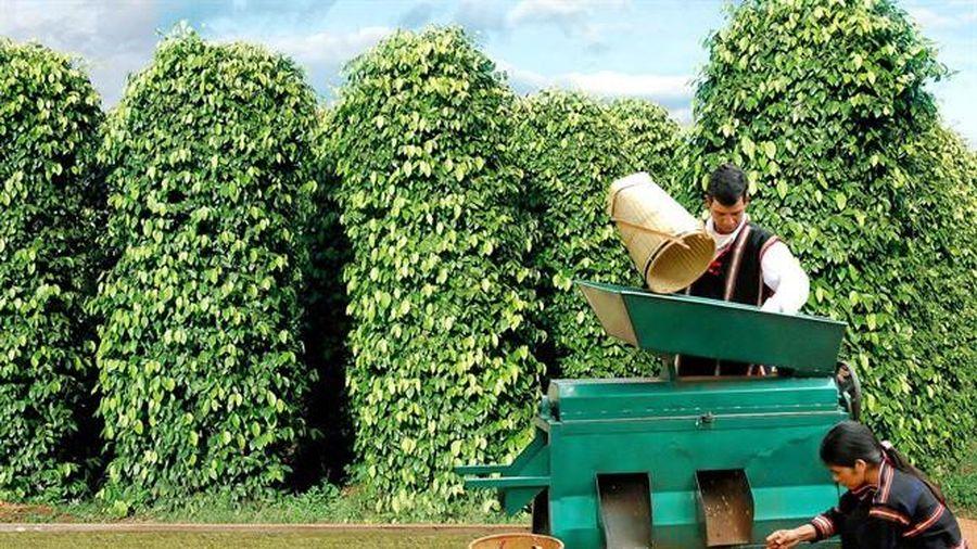 Cà phê và hồ tiêu đồng loạt giảm mạnh trong hôm nay 25/11