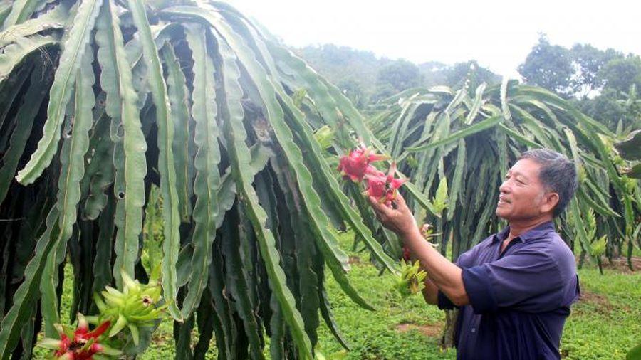 Nông nghiệp Uông Bí phát triển theo hướng công nghệ cao
