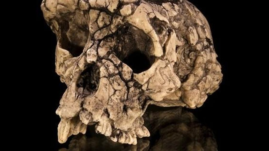 Sự thật sốc khi khám nghiệm hài cốt 'con người đầu tiên trên Trái Đất'