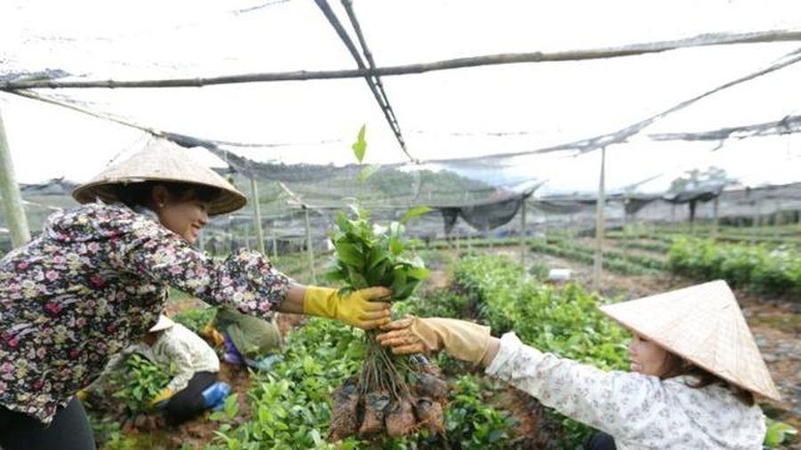 Đào tạo nghề cho lao động nông thôn: Có tiền mà khó tiêu
