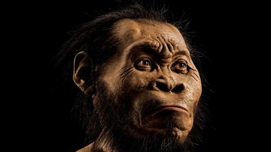 Kinh ngạc khi phát hiện tổ tiên mới của loài người