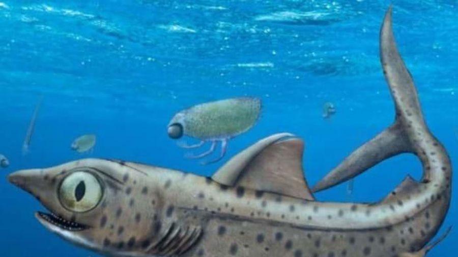 Phát hiện loài cá mập có bộ hàm 'máy nghiền' kỳ dị sống cách đây 370 triệu năm