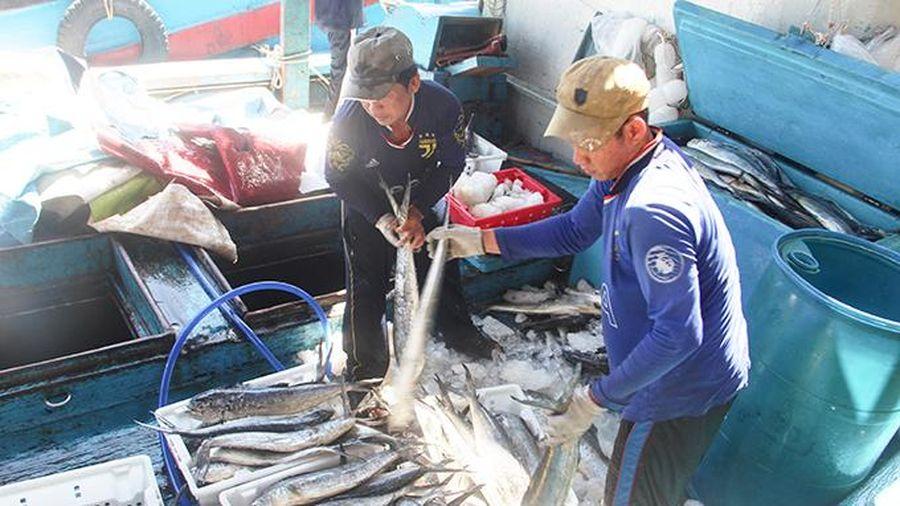 Tàu cá phải có chứng nhận an toàn thực phẩm