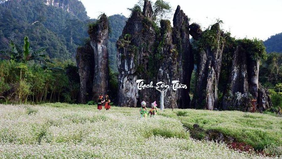 Lễ hội hoa tam giác mạch 'Sắc hoa cao nguyên đá'