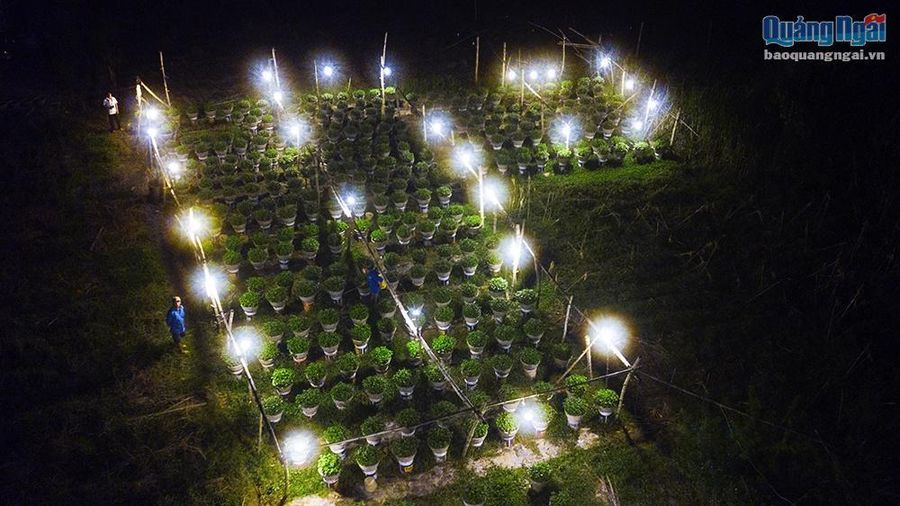 Chong đèn cho hoa Tết