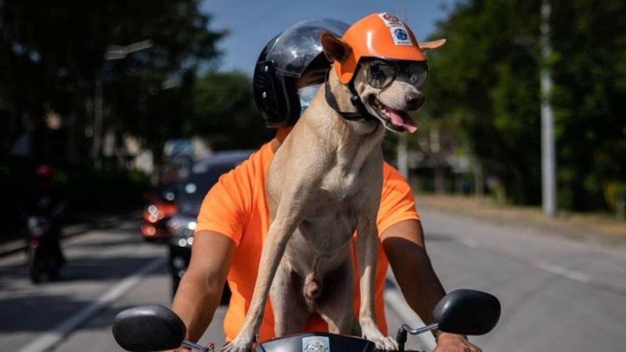 Chó đi vòng quanh Philippines bằng xe máy cùng chủ