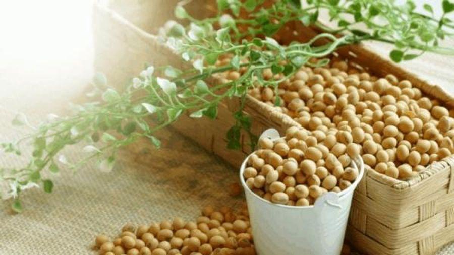 Lúa mỳ tăng mạnh trở lại trên mức 600 cents/giạ nhờ số liệu bán hàng tích cực